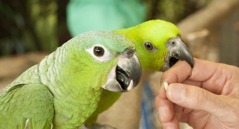 Przyjdź, nakarm ptaka w Akademii Papug przy ul. Garażowej 4, róg Wołoskiej i Woronicza