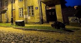 Duchy Mokotowa nocą: Fort Czerniakowski, Powsińska, Okrężna – lekcja historii po zmroku