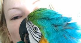 Oksana Volska woła na Facebooku: - Zaginęło moje drugie dziecko, papuga Charlie!