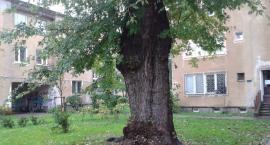 O czym szumią drzewa na Mokotowie? Dziś (10 października br.) w Big Book Cafe przy ul. Dąbrowskiego
