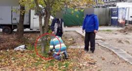 Złodzieje wycięli drzewo przy pętli autobusowej w pobliżu metra Wilanowska i są bezkarni