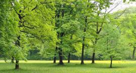 """Nowe drzewa przy mokotowskich ulicach, rozpoczęły się jesienne """"nasadzenia""""..."""