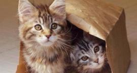 """""""Miau Cafe"""", jedyna w Warszawie kawiarnia z kotami, otworzyła swe podwoje na Mokotowie"""