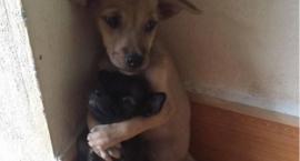 Najwięcej bezdomnych psów Straż Miejska znajduje na Mokotowie