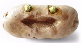 Mokotowska sobota (22 października) za darmoooooo! Ziemniak, plastyka, didżej
